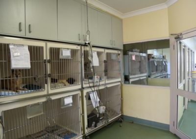 Independent dog and cat hospital wards